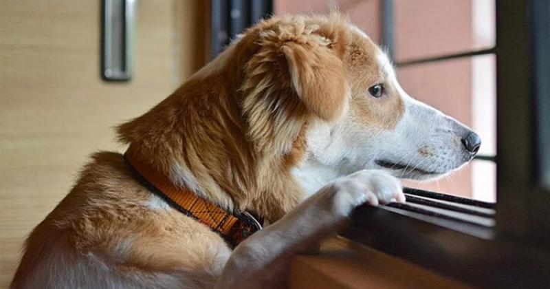 Meu Cachorro Não Gosta de Ficar Sozinho, e Agora?