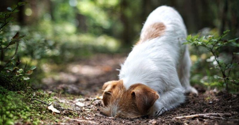 Por Que os Cães Cavam? Entenda os Motivos que Levam os Cães a Cavar e Saiba Como Impedir