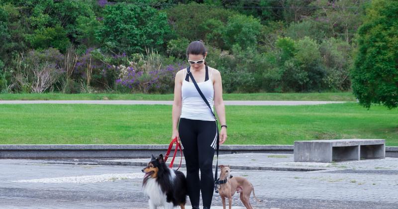 Guia Para Cachorro 3 em 1: Você Consegue Passear Sem Usar as Mãos?