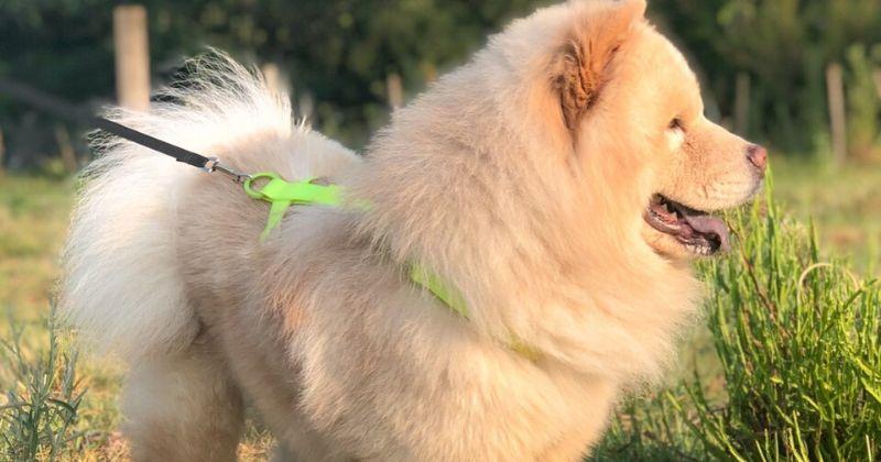 Cuidados Com Cachorro de Pelo Longo