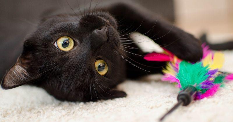 Como Brincar com Gato? Descubra e Divirta-se com Seu Bichano!