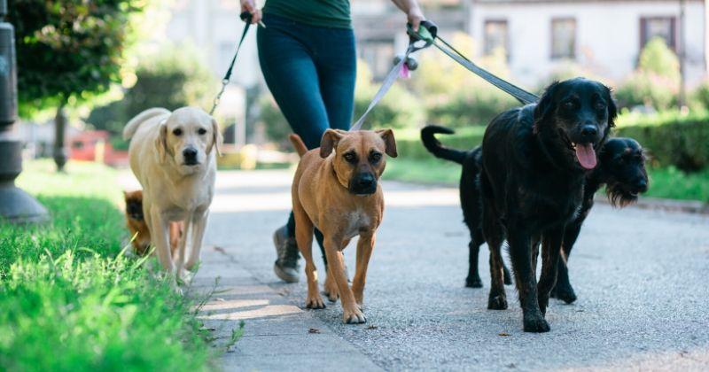 Como Evitar Briga de Cachorro Durante o Passeio