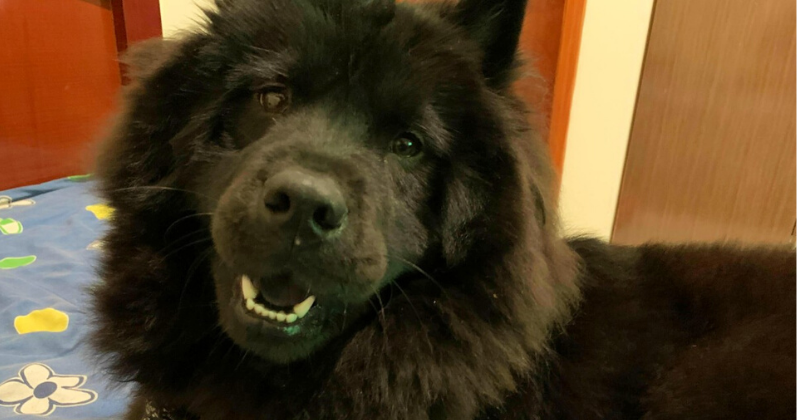 Preconceito Contra Raças de Cães: Você Sabia que ele Existe?