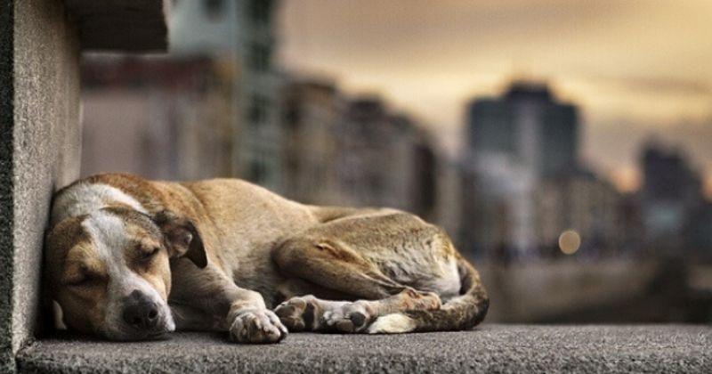 Cães e Gatos de Rua no Brasil