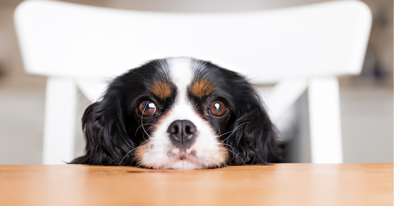 Dicas de Como Dar Remédios Para Cachorro