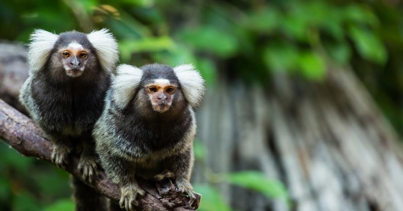 Animais Silvestres como Pets: O Que a Lei Diz
