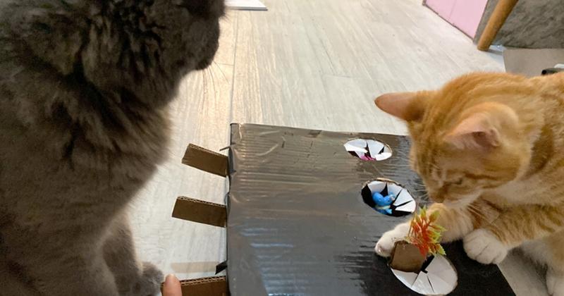 DIY: Como fazer uma Caixa dos Mistérios para Gatos com o BOX.Petiko