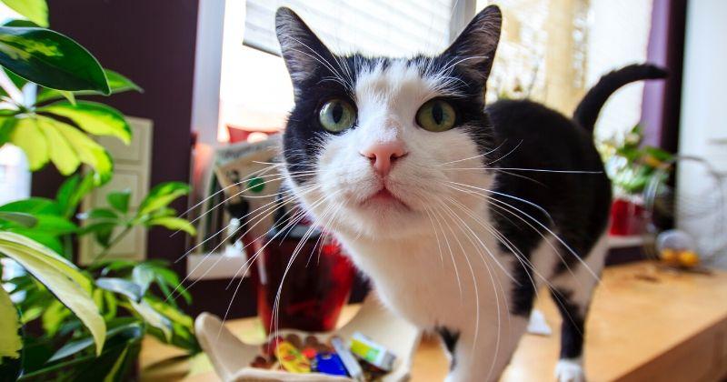 Tudo que Você Precisa Saber sobre Esporotricose em Gatos