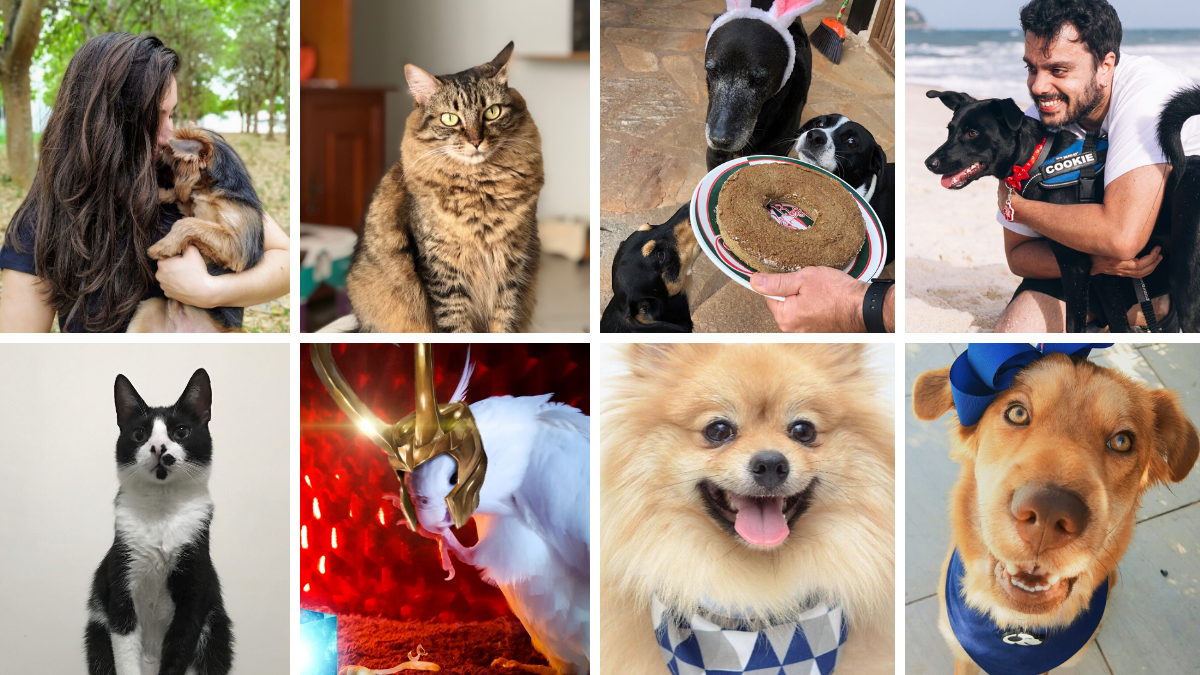 Histórias de Adoção Pet!