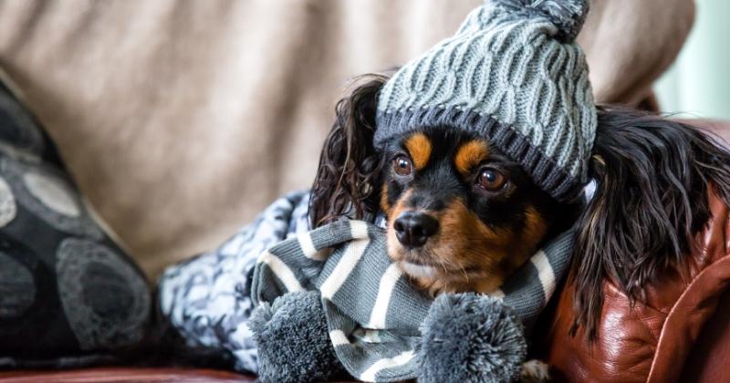 Cuidados com Cachorro no Inverno: Cuide dos Peludos no Frio!