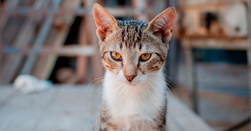 Saiba os Cuidados ao Adotar um Gatinho!