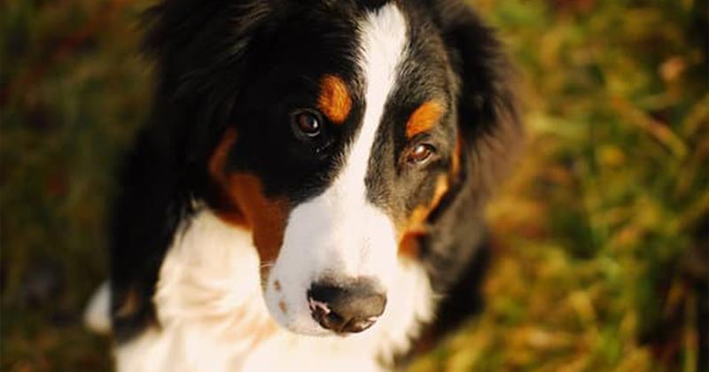 6 Maneiras de Acalmar seu Cachorro