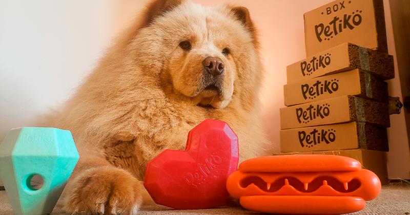 Brinquedos Interativos para Cães da Petiko