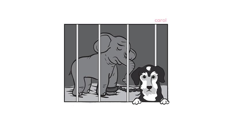 Tyke: A Elefante que se Tornou Símbolo do Sofrimento de Animais Circenses