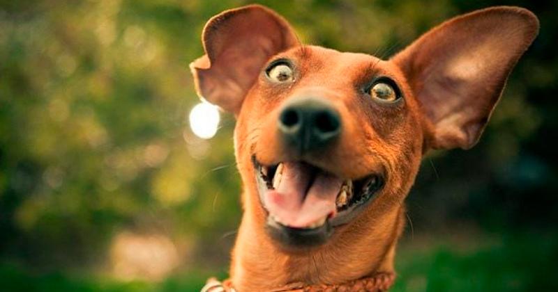 4 Coisas que Você Pode Fazer Para Seu Cachorro Viver Mais