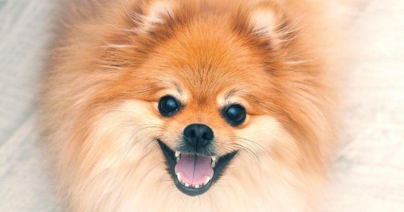 Alimentação Específica Para Cães Pequenos: Como Isso Funciona?