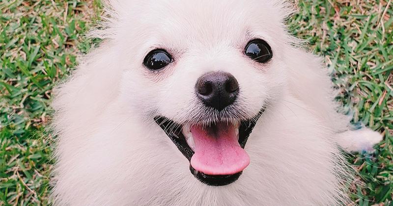 Você Entende Seu Cachorro?