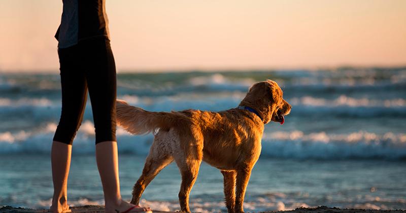 Como Passear Com Seu Cachorro na Praia