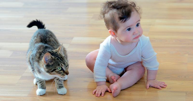 O Bebê Vai Chegar – Como Gerenciar Essa Relação com Seu Gato?