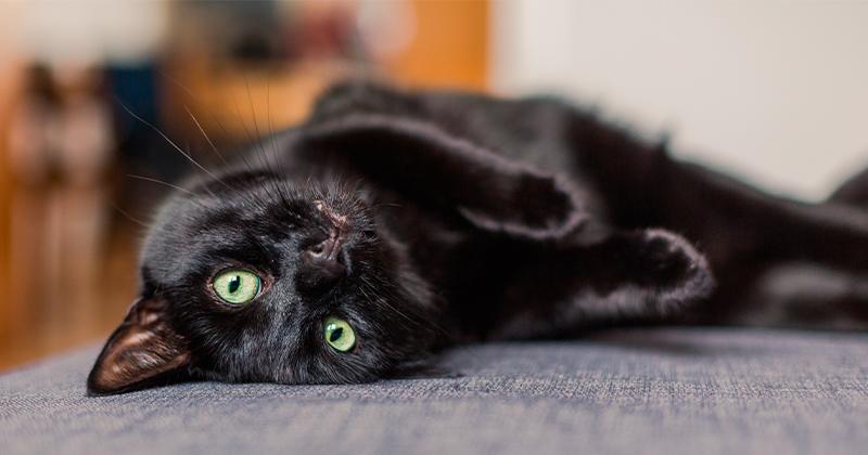 Gato Preto: Sim, Eles Ainda Sofrem no Dia das Bruxas
