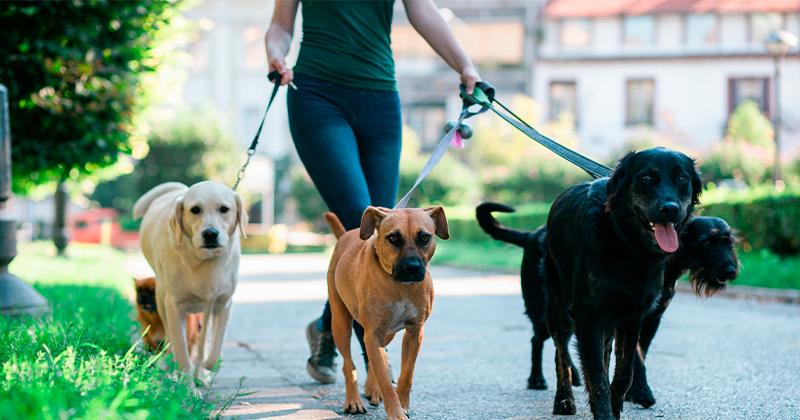 Importância dos Passeios com os Cães
