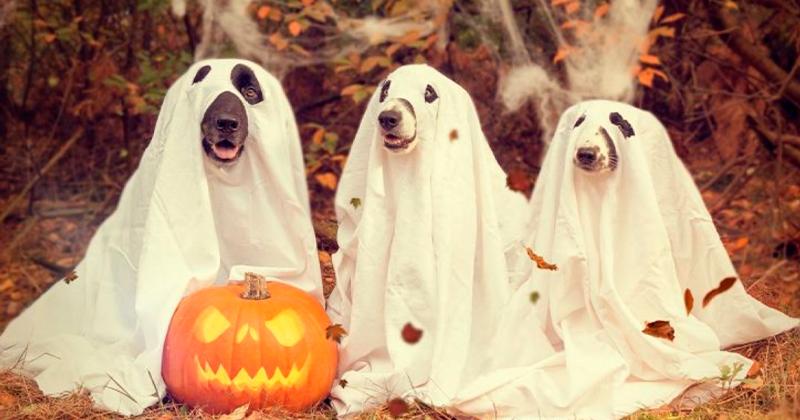 Será que os Cães Realmente Vêem Fantasmas?
