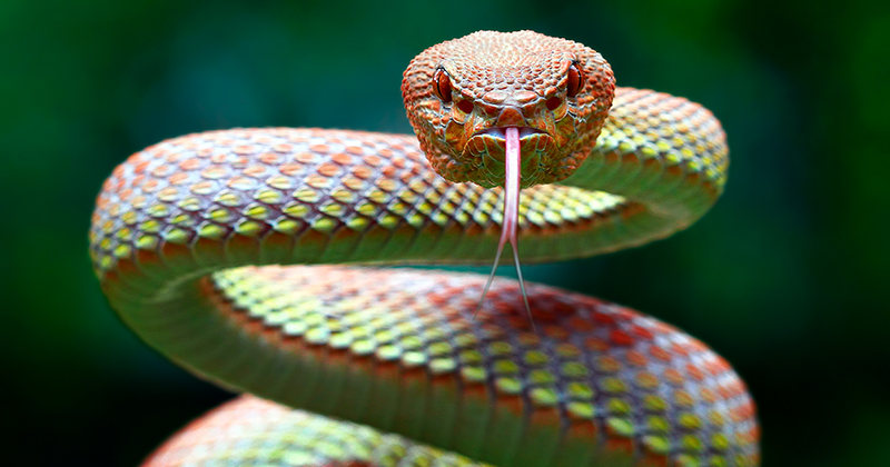 Entenda Por Que Cobra Não é Pet