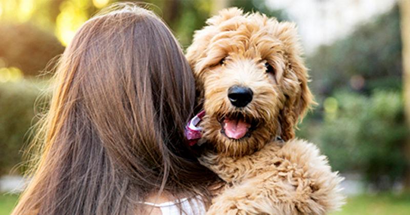 Cachorros Escolhem um Dono na Casa?