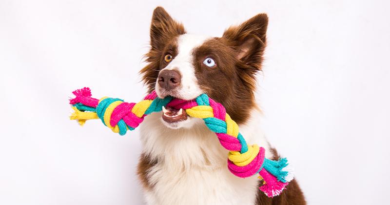 Como Limpar os Brinquedos do Seu Cachorro