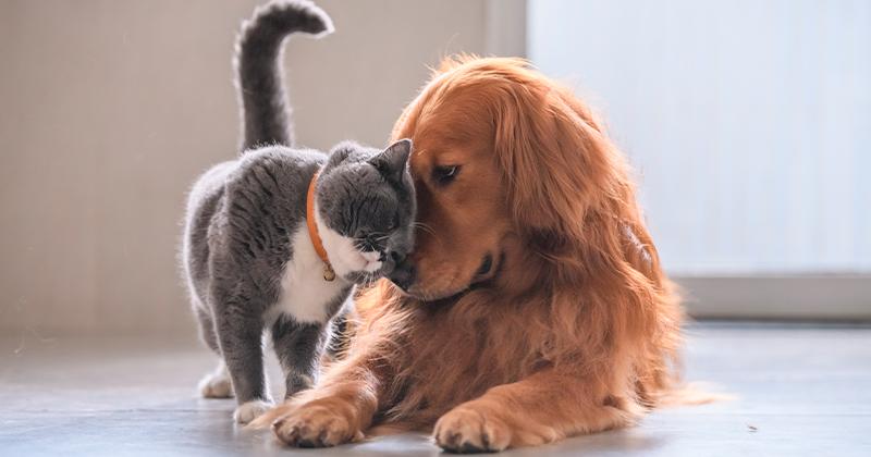 Cães e Gatos: Juntos e Felizes Para Sempre – 5 Passos Para o Sucesso!