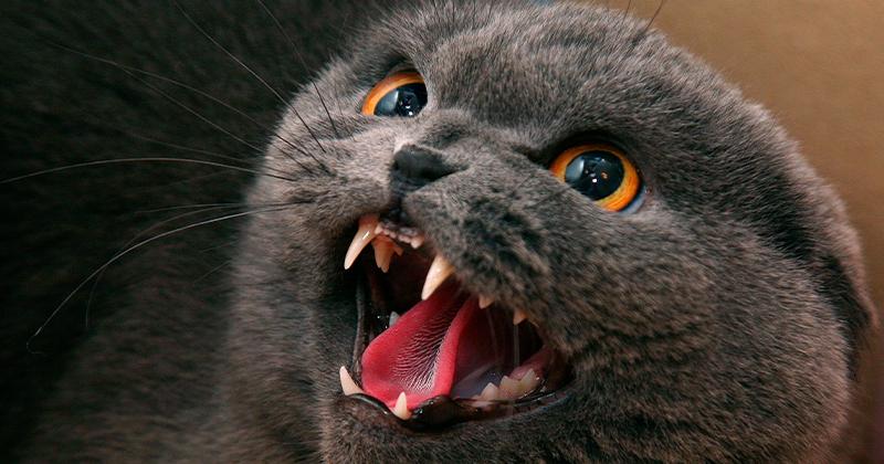 Meu Gatinho Está Ficando Agressivo, e Agora?