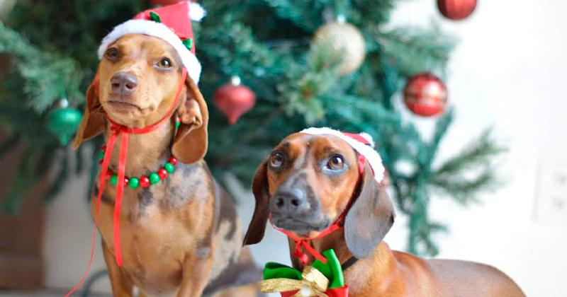 Natal Pet: Receitinhas e Cuidados
