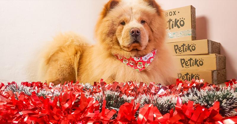 Cuidados Com o Pet nas Festas de Fim de Ano