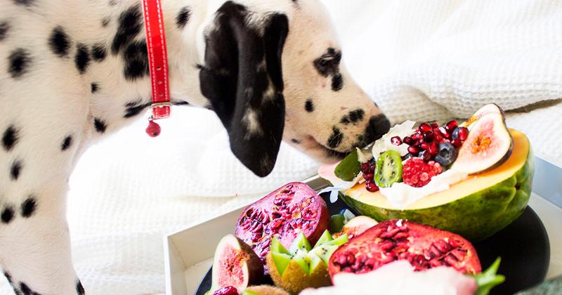 7 Alimentos Proibidos Para os Pets