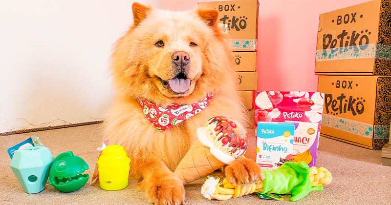 Natal Pet: 8 Alimentos Permitidos