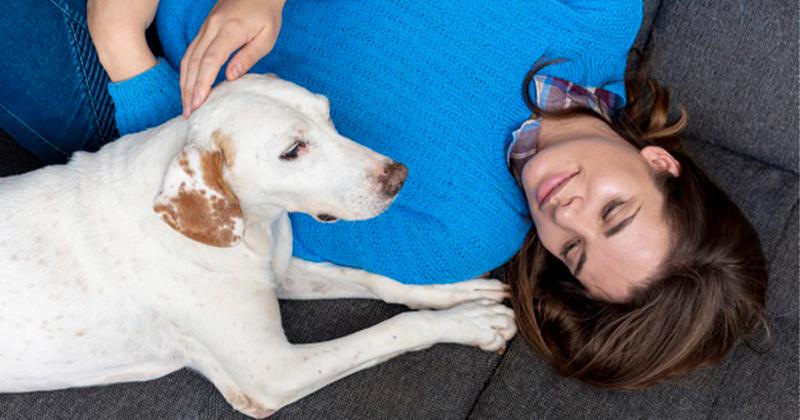 Pesquisas Apontam que Gatos e Cachorros Imitam a Personalidade do Tutor