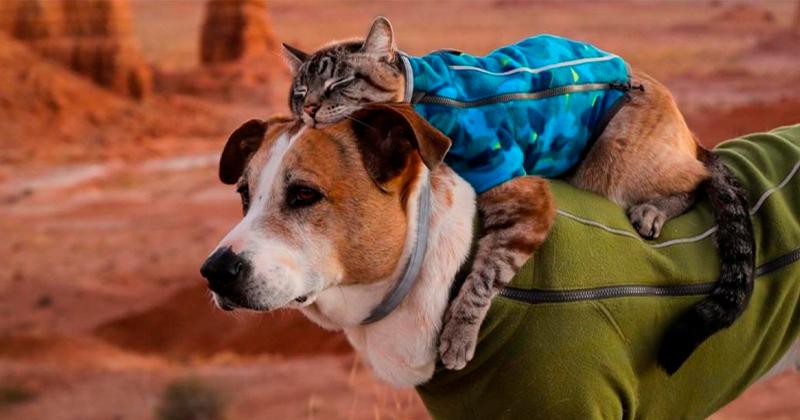 Cachorro e Gato, Viajam Pelo Mundo!