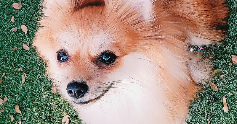 Cães Sentem Medo? Como Ajudar?