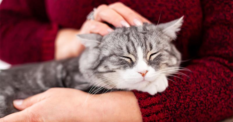 7 Cuidados Essenciais com Gatos Idosos