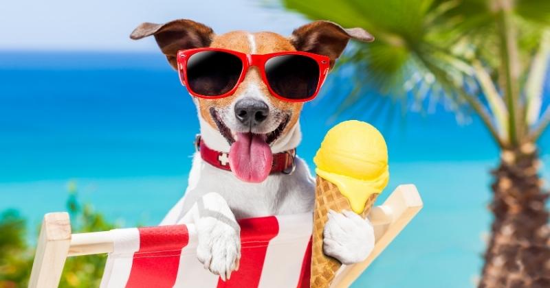 3 Receitas de Verão Para os Pets