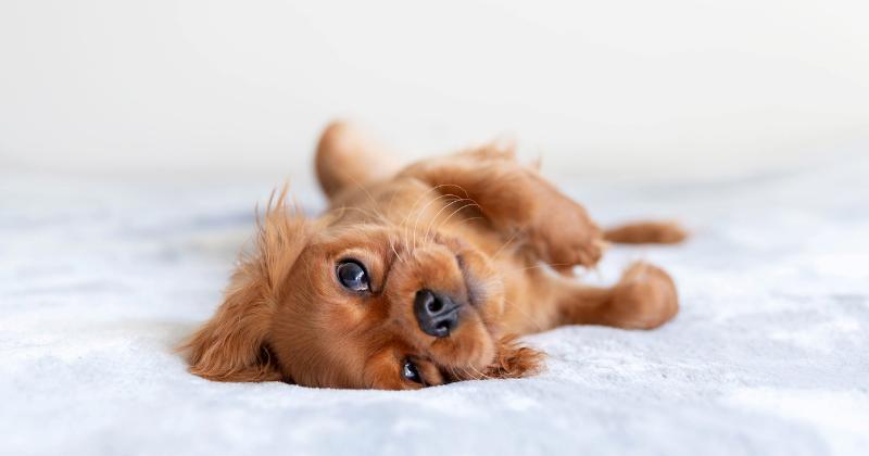 Como Escolher um Filhote de Cachorro: Os 5 Obstáculos Que Todo Dono Vai Encontrar e Como Vencê-los