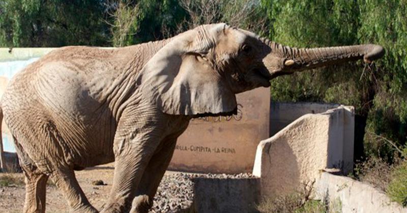 Liberdade Para Tamy: Santuário Precisa de Ajuda Para Abrigar Elefante de 50 Anos