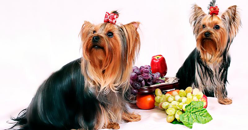 Frutas Permitidas Para Animais