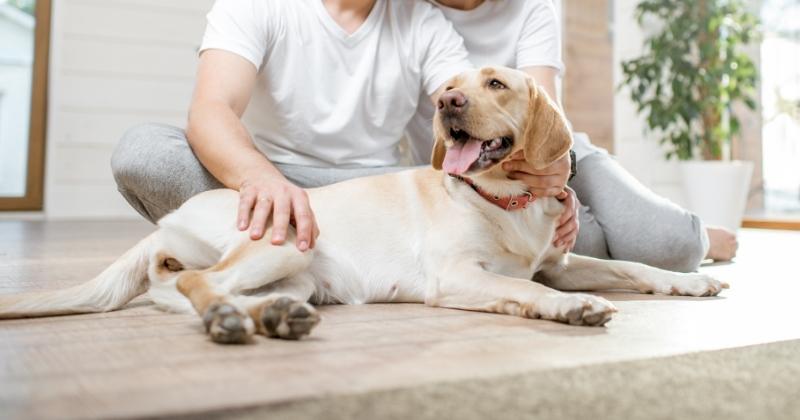 Preparando o Ambiente da Casa Para Seu Cãozinho