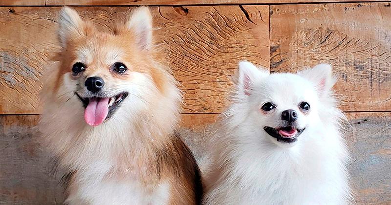 3 Necessidades Básicas dos Cães