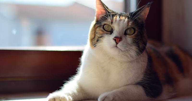 Gato em Apartamento: 4 Dicas Para Garantir o Bem-estar do Bichano