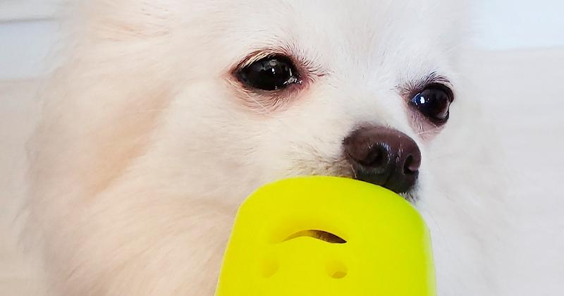 Seu Pet Não Brinca? Saiba Como Motivá-lo!