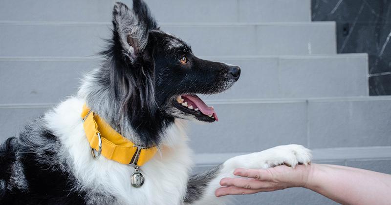 Como Acalmar Seu Cachorro no Passeio