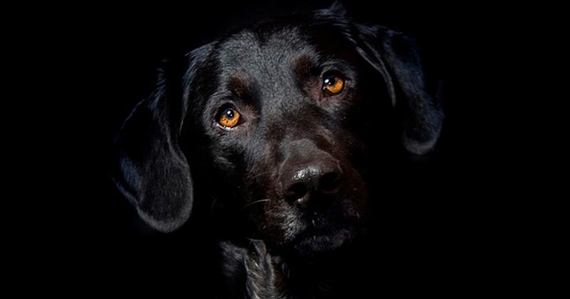 Cães Enxergam no Escuro?