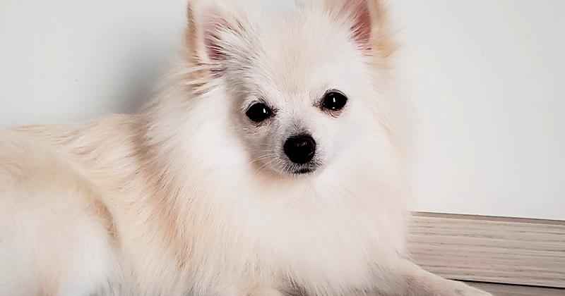 3 Motivos Para Você Treinar seu Cachorro